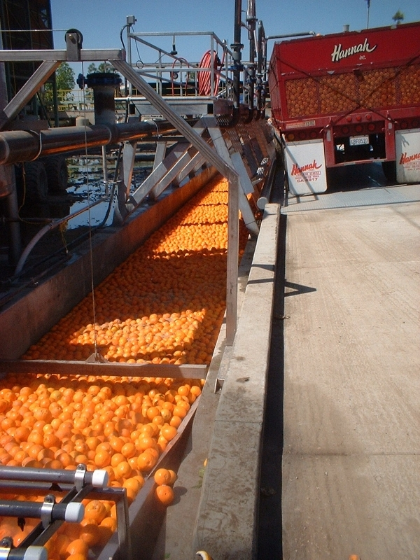 large-scale-citrus-operations-3